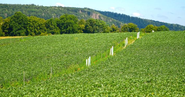 Agroforst auf dem Gladbacherhof